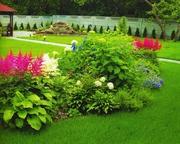автоматический  полив газон озеленнение ( Полив Мастер) растения